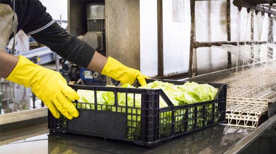 Persona che passa cassetta di insalata su rullo